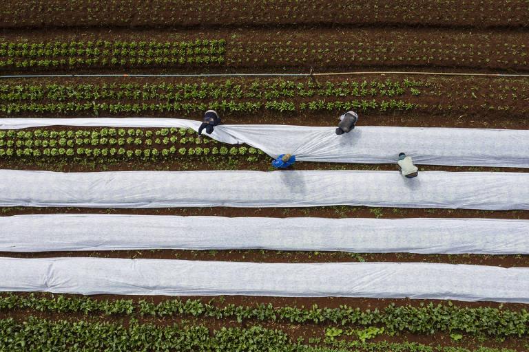 Entenda por que a geada tira o sono dos agricultores