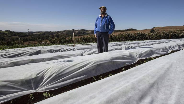 Produtores tentam proteger plantação contra geada