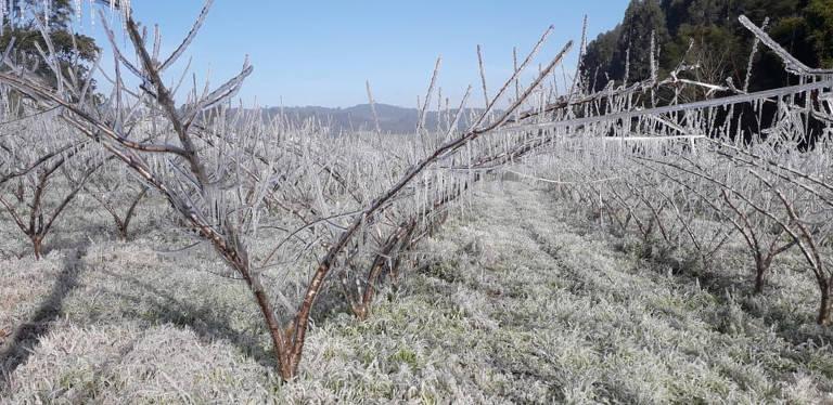 Exemplo de sistema de irrigação por aspersão no cultivo de pêssego, em Videira (SC)