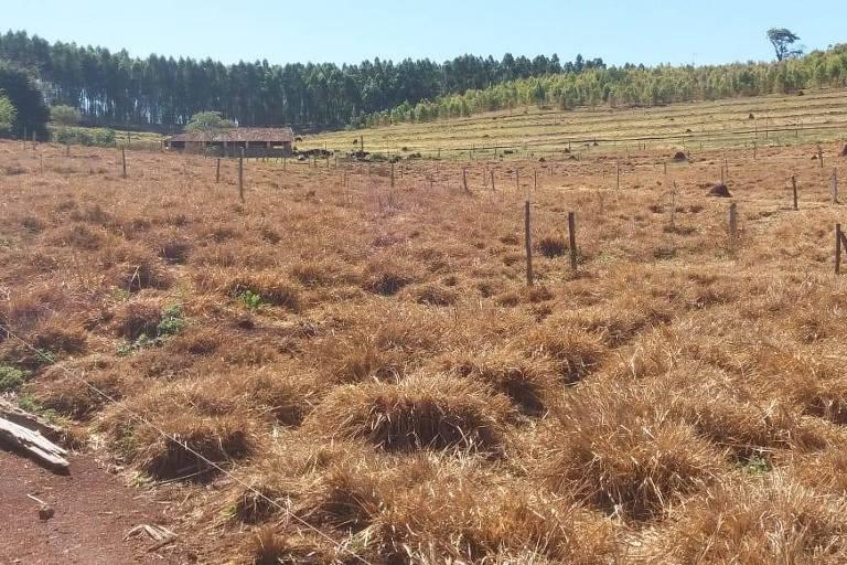 Sequência de geadas danifica pastagem em Pardinho. Foto na propriedade de Otávio de Pontes Ribeiro Junior