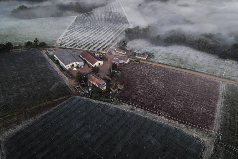 Geada atinge plantações após onda de frio