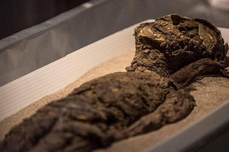 Uma múmia está disposta em uma caixa com areia