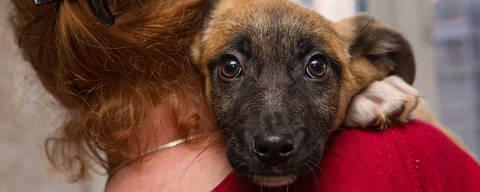 Homeless puppy from a shelter at the hands of a woman .Photo: Okssi / Fotolia ***DIREITOS RESERVADOS. NÃO PUBLICAR SEM AUTORIZAÇÃO DO DETENTOR DOS DIREITOS AUTORAIS E DE IMAGEM***