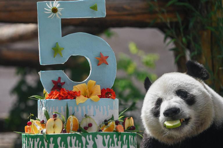 Imagem mostra um panda ao lado de um bolo com uma vela de número 5