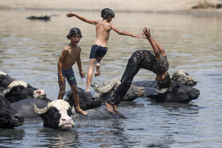 Imagem mostra três meninos nadando junto com búfalos