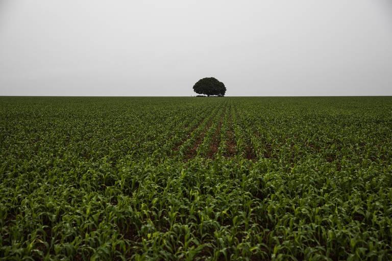 Expansão de área exige importação recorde de fertilizantes e de agrotóxicos