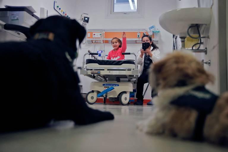 Cães de terapia ajudam crianças em hospital no Chile