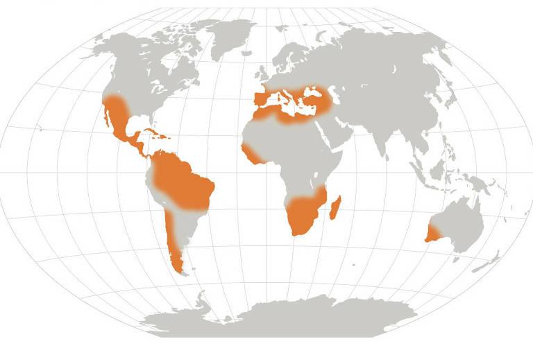 Mapa-múndi em cinza com regiões destacadas em laranja