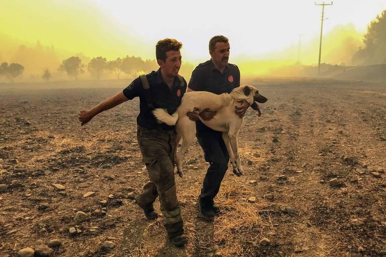 Animais afetados por incêndios florestais