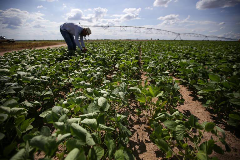 A China adotaria barreiras ao agro brasileiro por motivos climáticos?