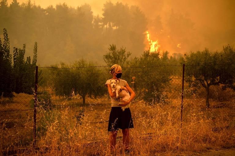 Grupos se mobilizam na Grécia para cuidar de gatos e cães após incêndios