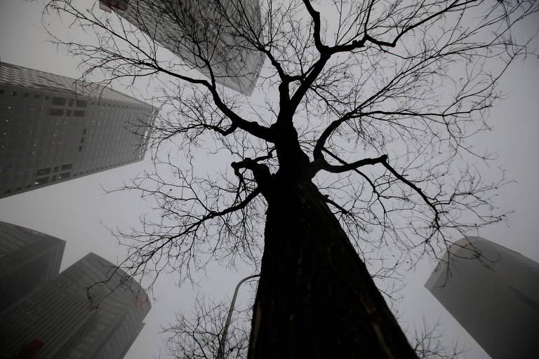 China lança maior mercado de carbono do mundo, e Brasil fica para trás; entenda como funciona o sistema