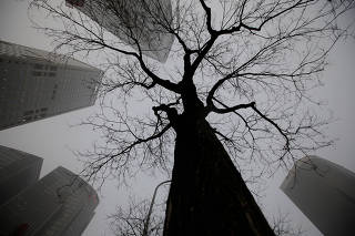 Buildings are seen around a tree during smog in Beijing