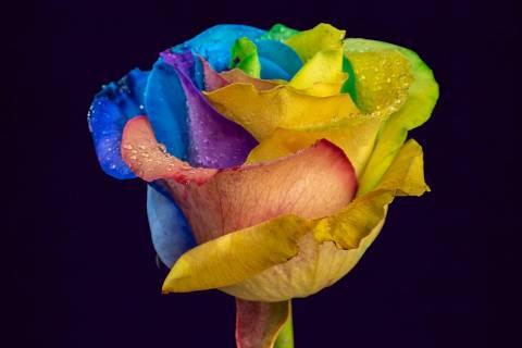 Flor colorida (pétalas) no copo - Web Stories - Sinestesia