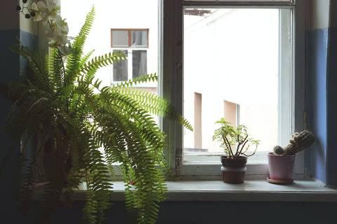 Plantas na janela no inverno - cacto, samambaia, suculenta - Web Stories