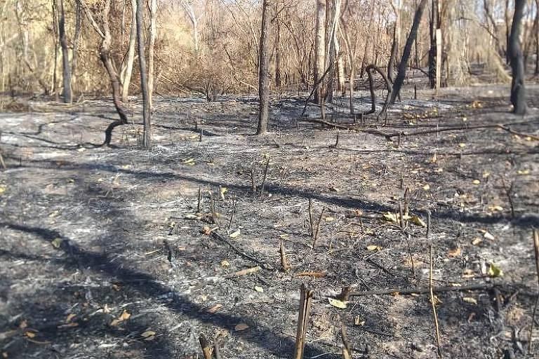 Imagem mostra parte de plantação de limão devastada pelo fogo