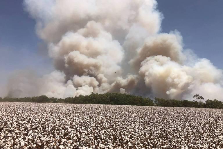 Nuvem de fumaça ao fundo de um morro e, à frente, uma plantação de algodão