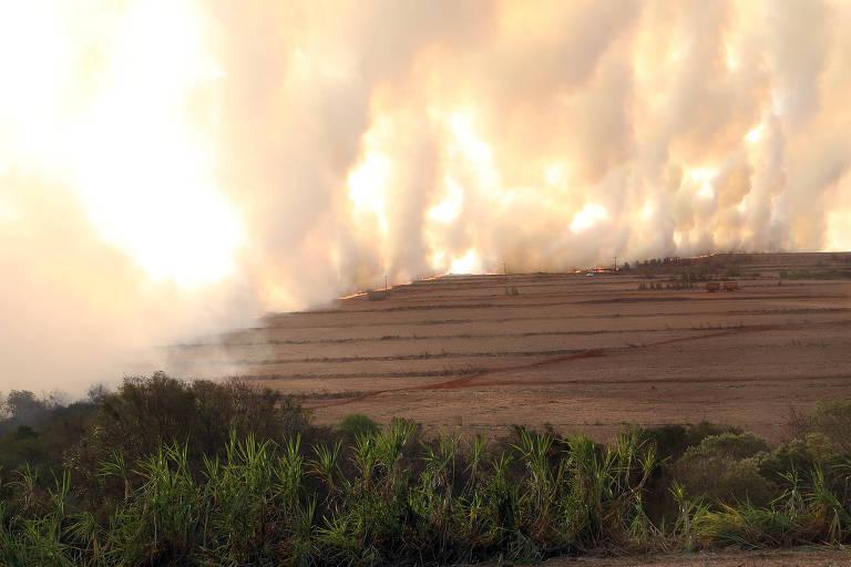 Área de plantio com incêndio ao fundo