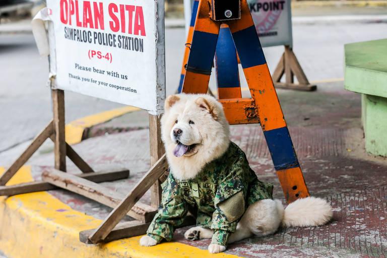 Cão em missão no Haiti e animais vítimas de incêndios florestais; veja pets pelo mundo