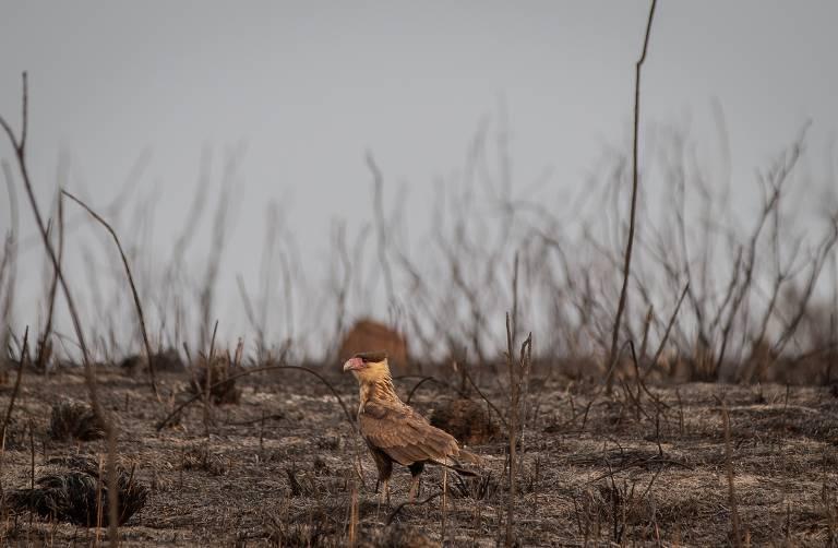 Descaso ambiental na pior seca do século transforma interior paulista em algo pior do que Mordor