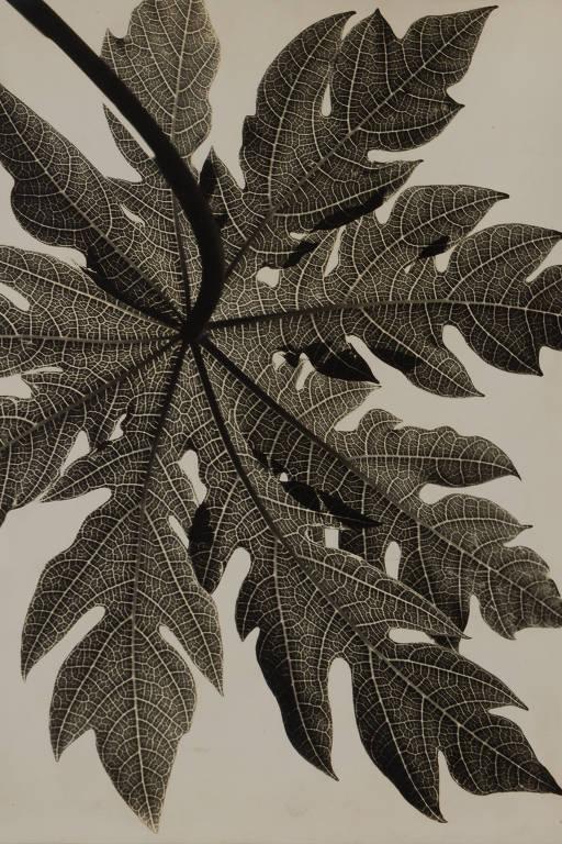 Imagem de folha que mostra os detalhes dos padrões da folha