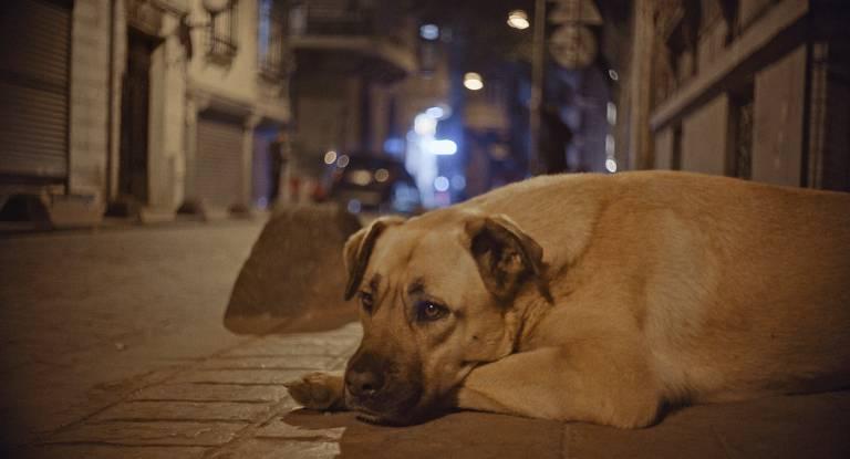 """Filme - """"Vida de Cão"""""""