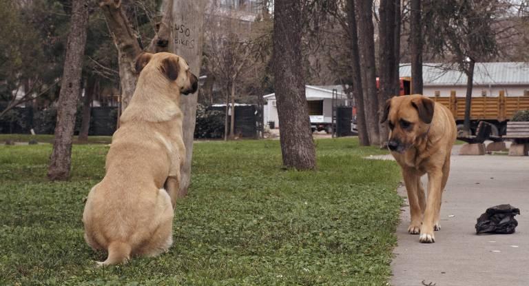 Filme 'Vida de Cão' retrata solidão e busca por sobrevivência de animais nas ruas