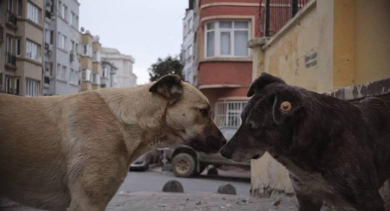 Filme sobre cães abandonados pode incomodar pela dureza