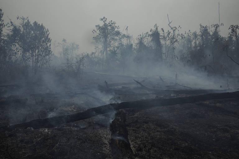 Queimadas na Amazônia impactam 90% das espécies de animais e plantas da floresta
