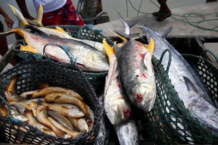 Relacionada com uma toxina encontrada em peixes e crustáceos, a doença de Haff é rara, mas tem causado alguns surtos no Brasil nos últimos cinco anos