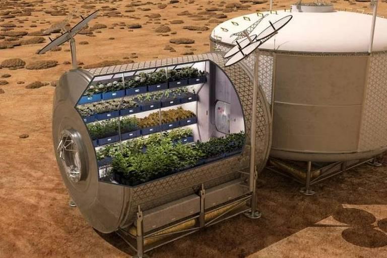 Imagem mostra uma estufa e dentro dela uma plantação de alface
