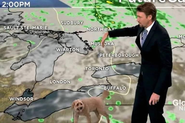 Cachorro de meteorologista invade apresentação da previsão do tempo