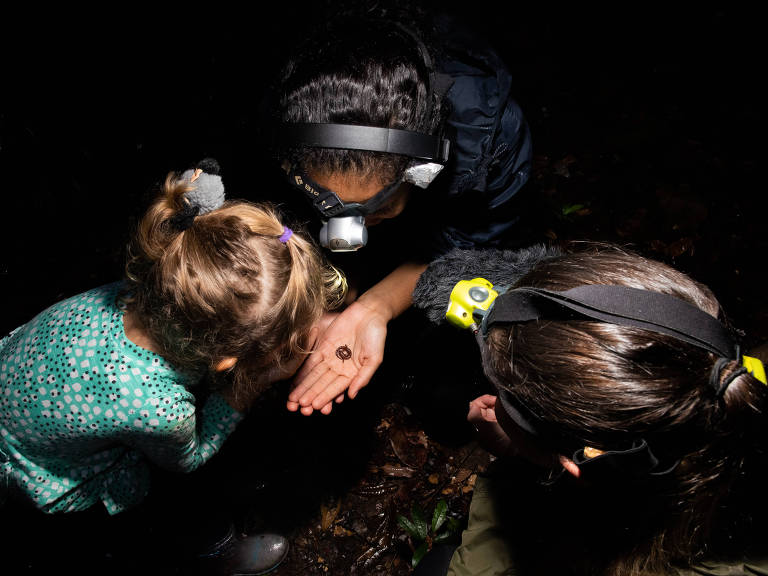 Imagem noturna, vista de cima. Três cabeças de mulheres voltadas para baixo, observando a salamandra na mão de uma delas
