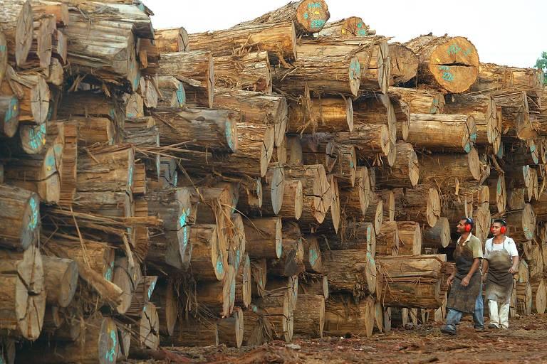 Operários trabalham em empresa que processa e exporta madeira certificada no Pará