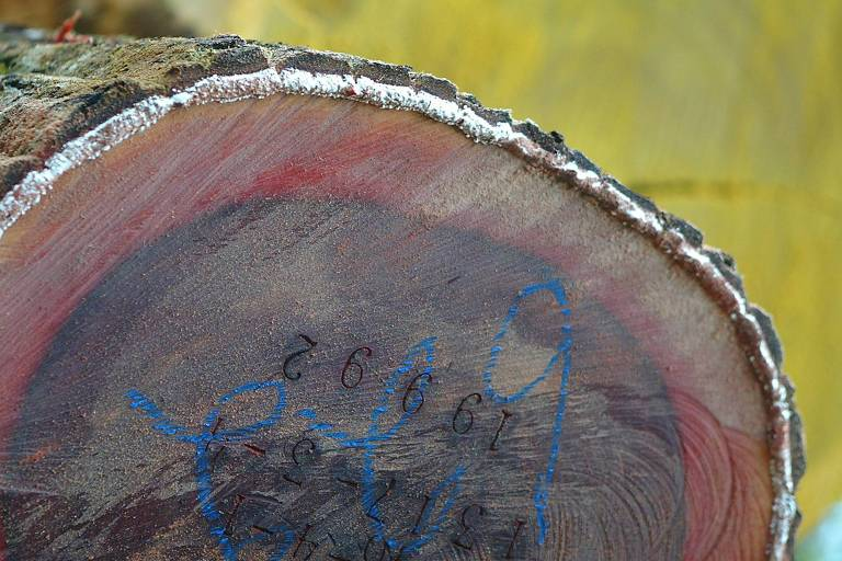 Tora de madeira certificada pronta para exportação
