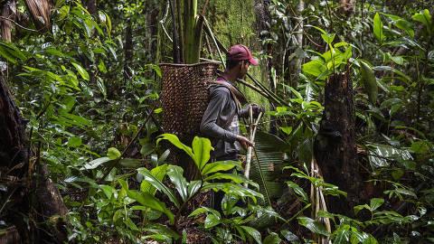Coletor de castanha trabalha em reserva extrativista no Amazonas ORG XMIT: AGEN2007241215396426
