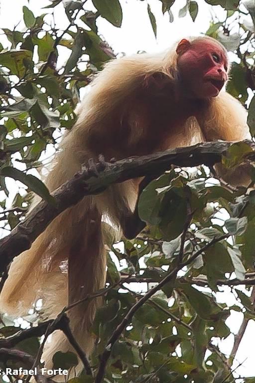 Ecoturismo amazônico entra no radar do brasileiro
