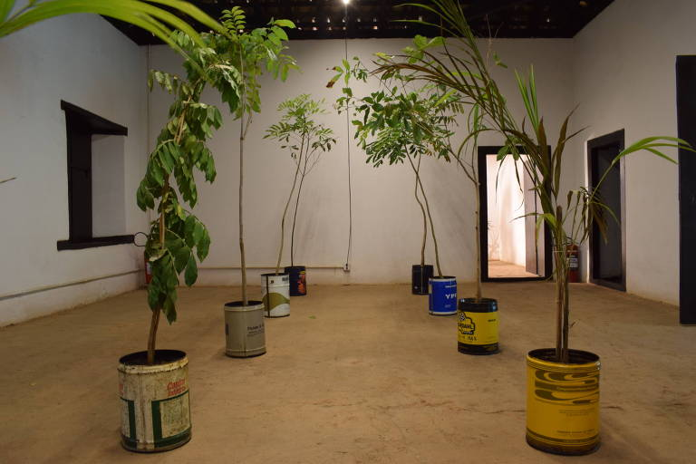 oito latas da indústria petroquímica com mudas de planta dentro espalhadas por um cômodo