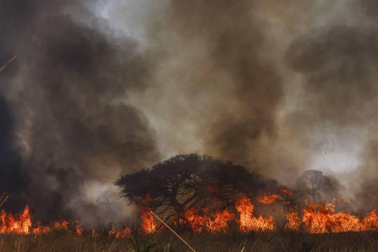 No Pantanal, fogo reaparece com força em rodovia turística de Mato Grosso