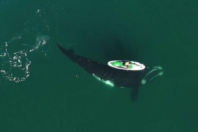 O impressionante encontro entre baleias e banhista na Argentina