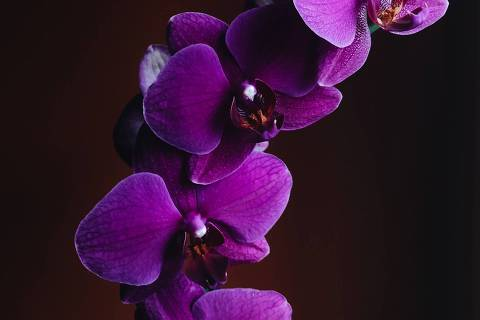 Orquídea Roxa - Web Stories