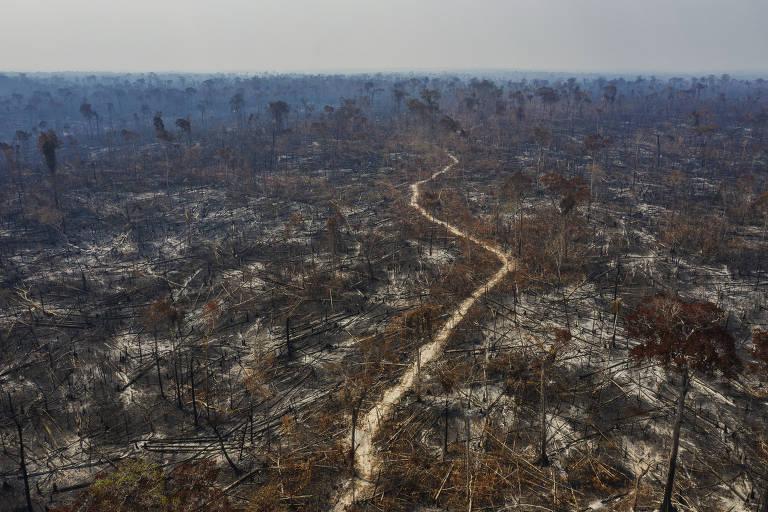 Pequena estradinha de terra, formando linhas tortas, em meio a áreas cinzentas em volta, com sinais de queima recente