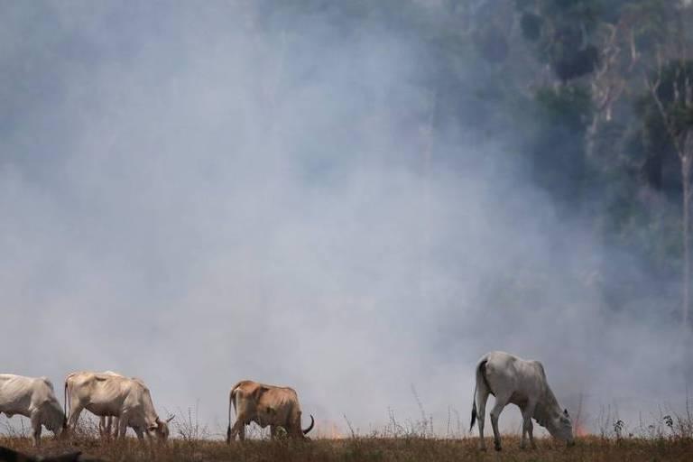 Imagem mostra gado em um pasto e uma fumaça branca