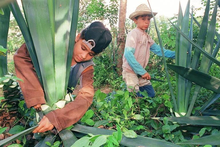 crianças trabalham em plantação