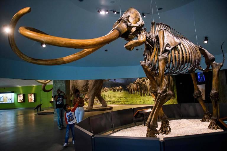 Esqueleto de mamute no museu George C. Page, em Los Angeles (EUA)