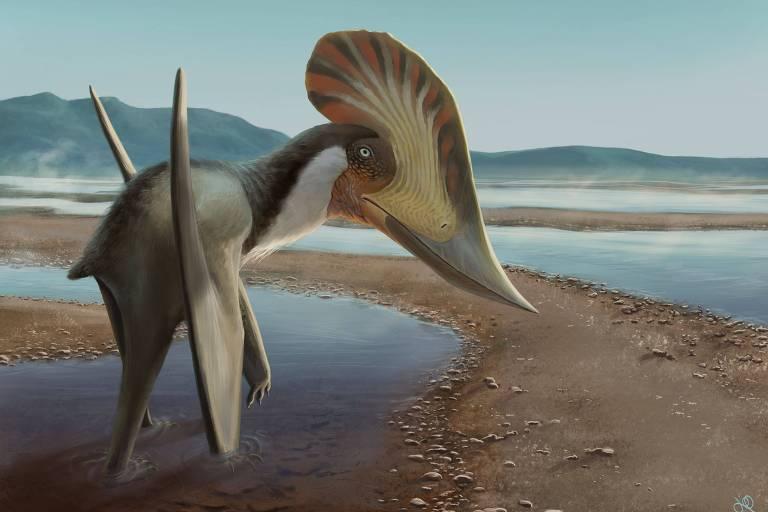Novo pterossauro brasileiro chama a atenção por crista bizarra