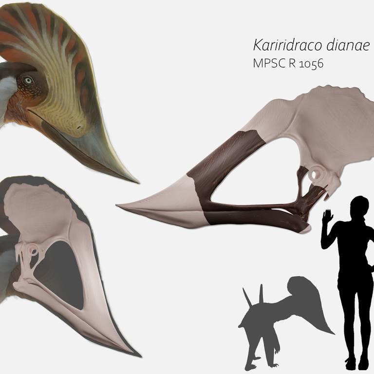 Reconstrução do crânio do pterossauro que habitava, há mais de 100 milhões de anos, o Nordeste brasileiro