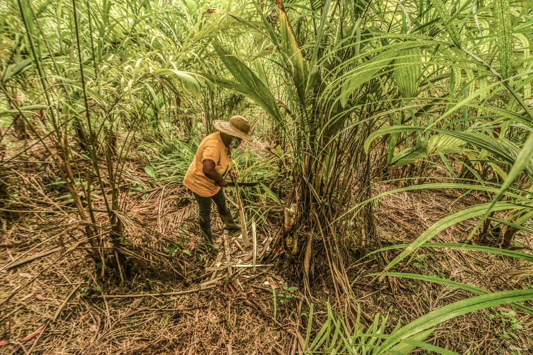 Projeto leva produção de quilombos no Vale do Ribeira à periferia paulistana