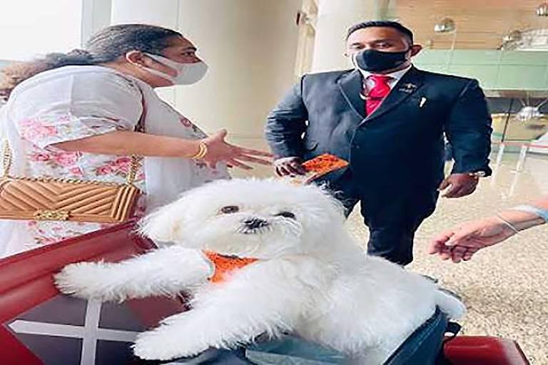 Cão da raça maltês em cima de uma mala com mulher e funcionário de aeroporto ao funod