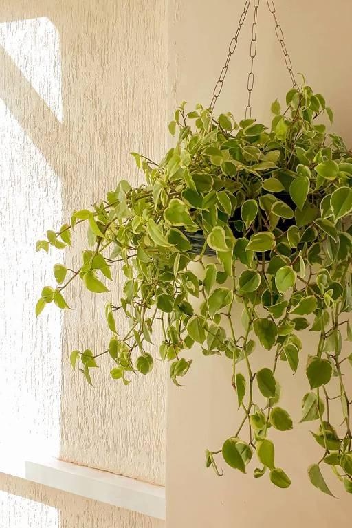Planta verde em vaso branco pendurado